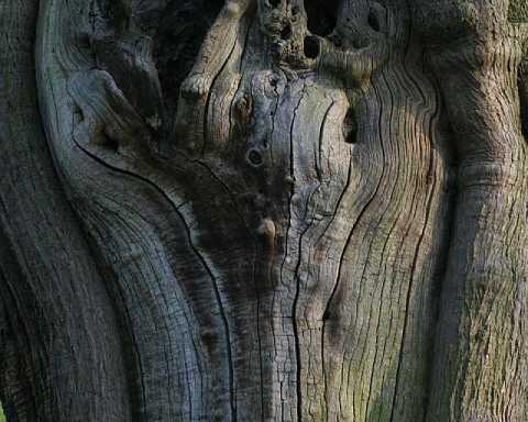 Face of the Tree by Scott Joyce