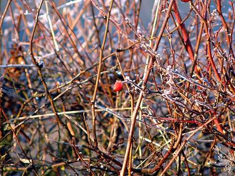 Twigs in ice by Scott Joyce
