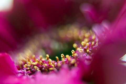 Flower stamen by Scott Joyce