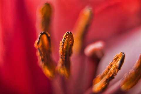 Red by Scott Joyce