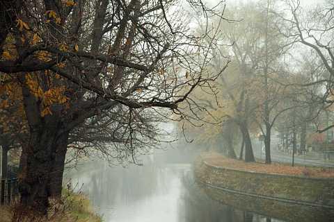 In the mist by Scott Joyce