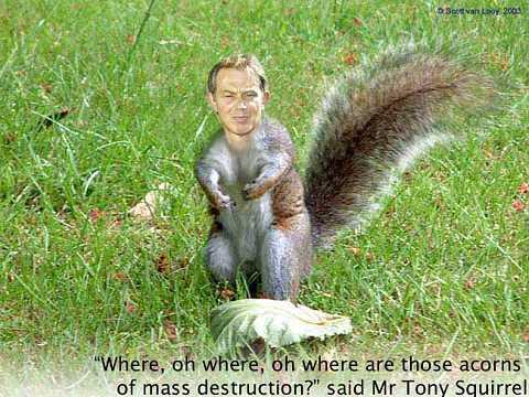 TonyTheSquirrel by Scott Joyce
