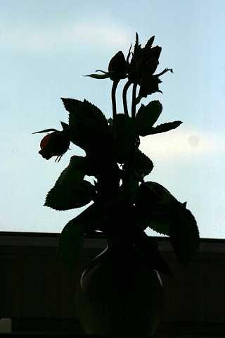 Flowers 9 by Scott Joyce