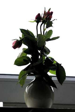 Flowers 8 by Scott Joyce