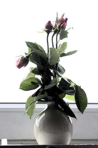 Flowers 7 by Scott Joyce