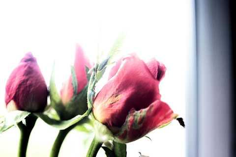Flowers 6 by Scott Joyce
