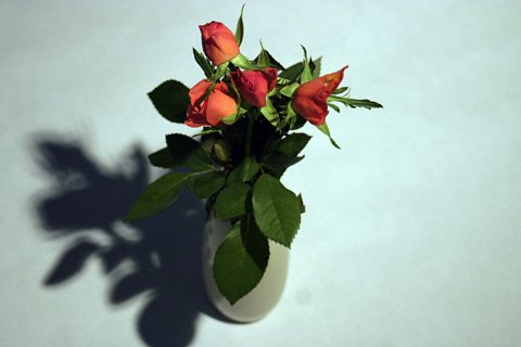 Flowers edit by Scott Joyce