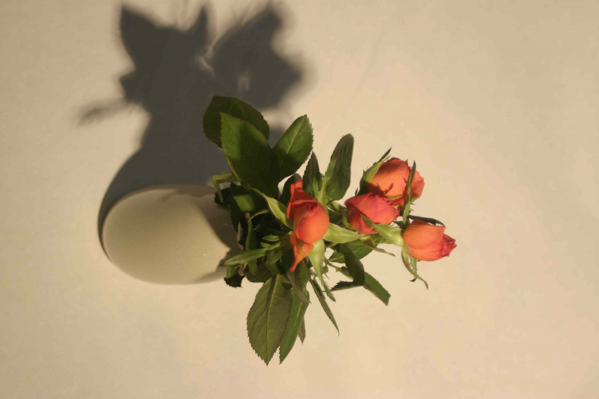 Photographing flowers original