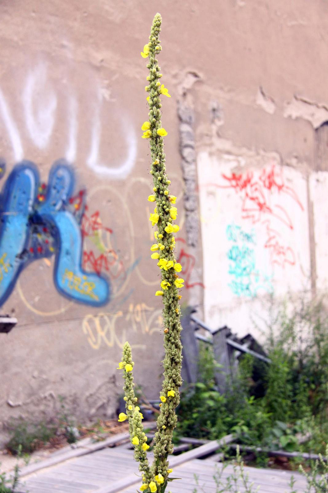 Flowers and walls