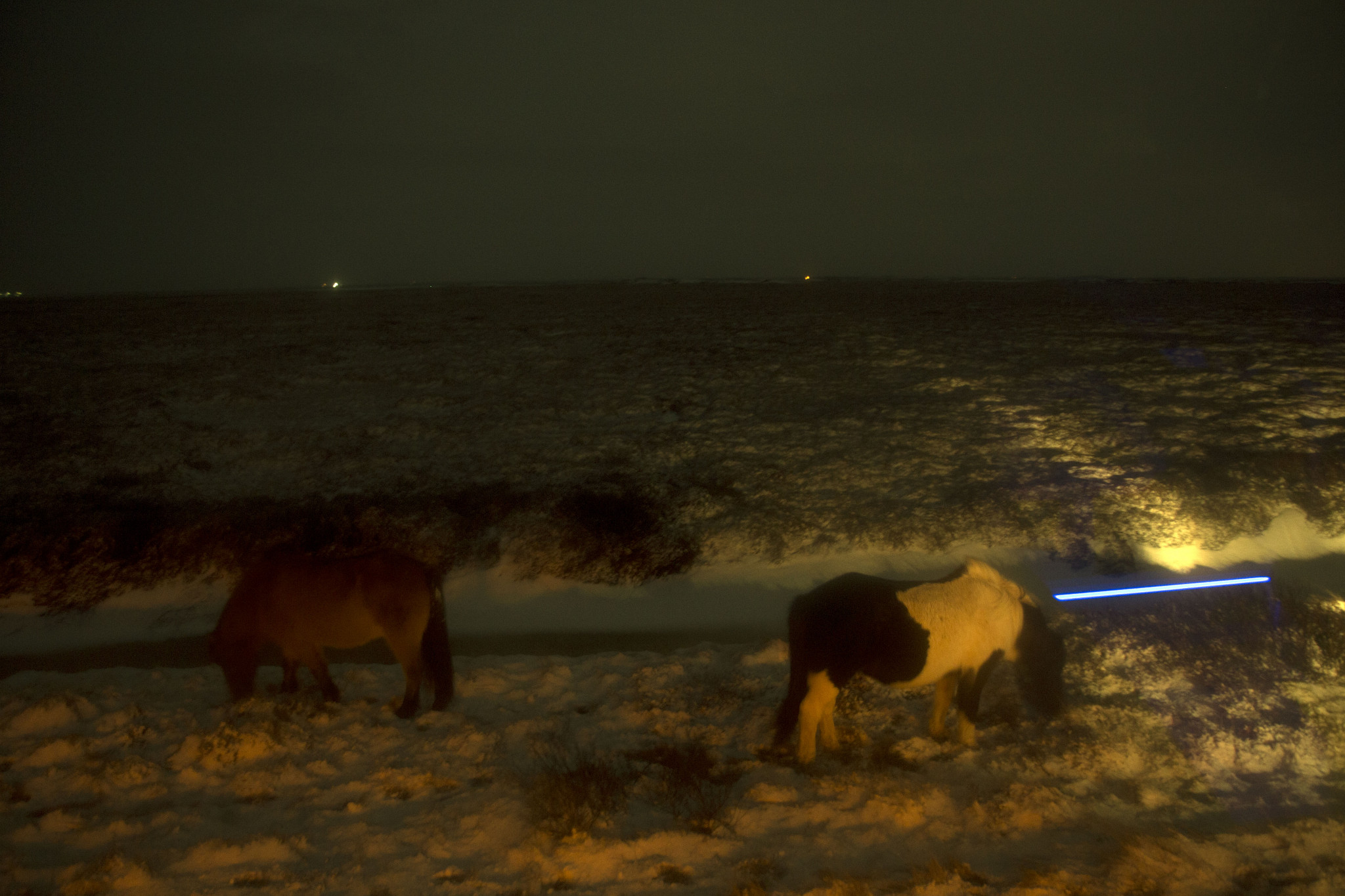 Horses in the dark.