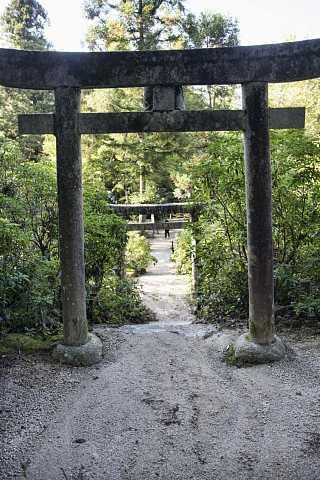 Torii gates, Miyajima by Scott Joyce