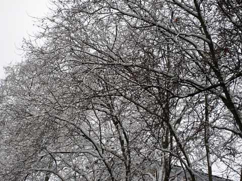 Snowy London by Scott Joyce