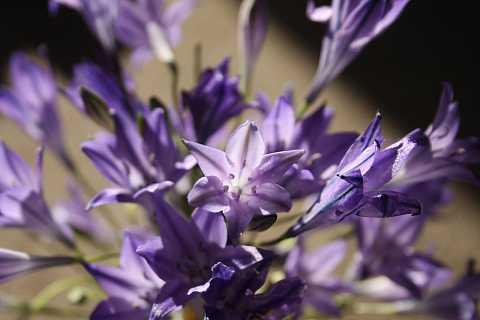 Pretty in Purple by Scott Joyce