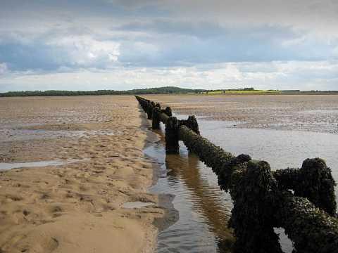 Mud Flats by Scott Joyce
