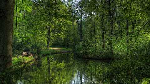 Tiergarten in Spring by Scott Joyce
