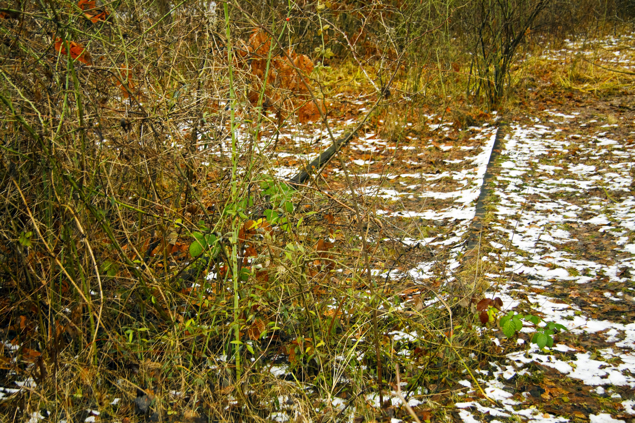 Old tracks in snow