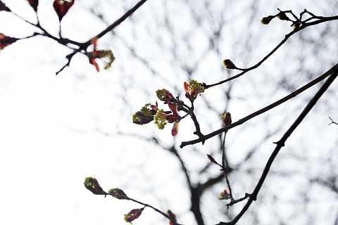 Spring by Scott Joyce
