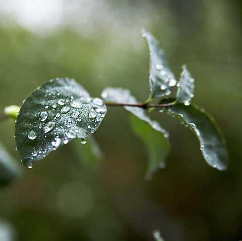 droplets by Scott Joyce