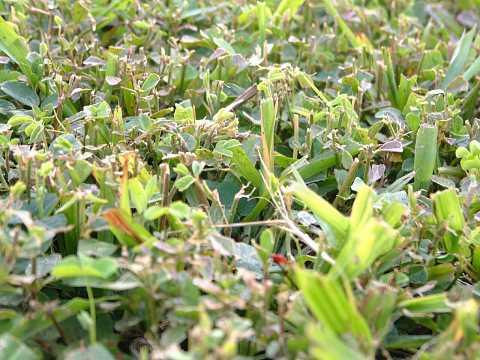 Hardened grass by Scott Joyce