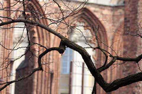 Franziskaner Klosterkirche by Scott Joyce