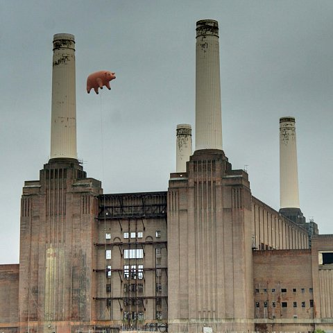 Pigs on the Wing by Scott Joyce