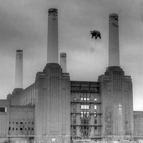 Animals by Scott Joyce