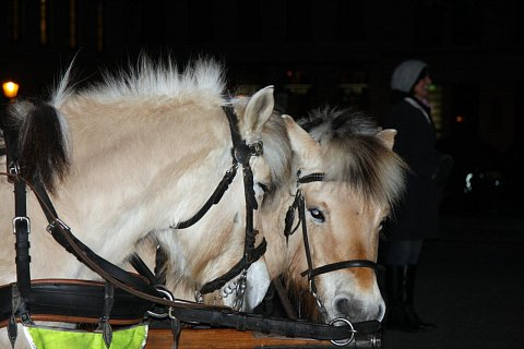 Ponies by Scott Joyce