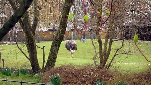 Emus by Scott Joyce