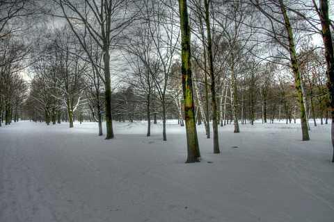 Tiergarten 2 by Scott Joyce