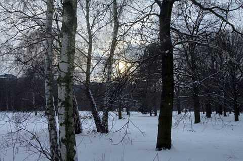 Tiergarten 4 by Scott Joyce