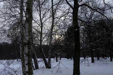 Tiergarten 5 by Scott Joyce