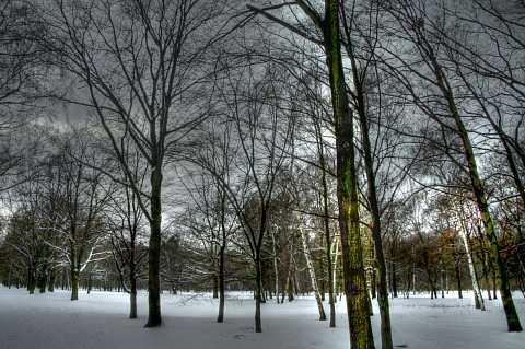 Tiergarten 3 by Scott Joyce