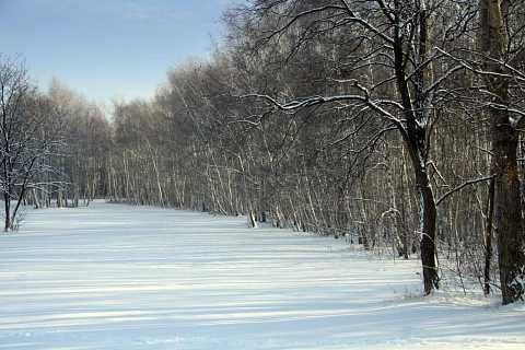 Winter wonderland by Scott Joyce