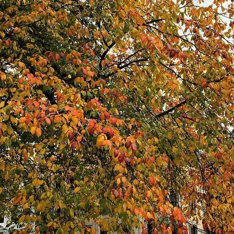 Autumn colours. by Scott Joyce