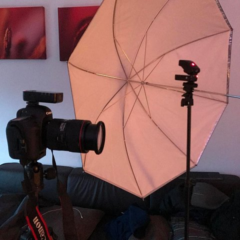 Pretending to be a photographer again ;) by Scott Joyce