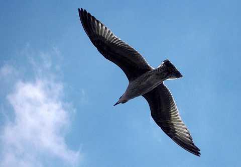 The Birds by Scott Joyce