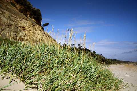 Grassy Sand dune by Scott Joyce
