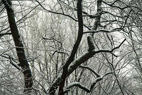 February Snow 13