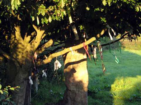 Glastonbury 2007 041 by Scott Joyce