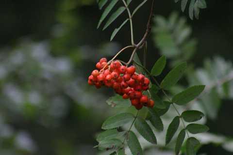 red berry by Scott Joyce