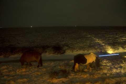 Horses in the dark. by Scott Joyce