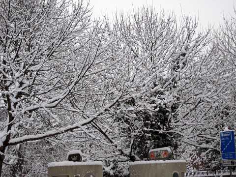 Snow 005 by Scott Joyce