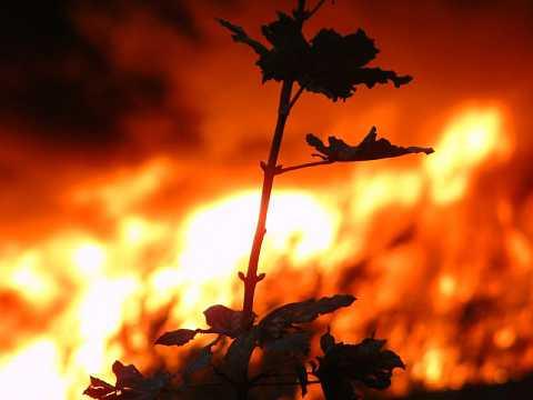 Fire relief by Scott Joyce