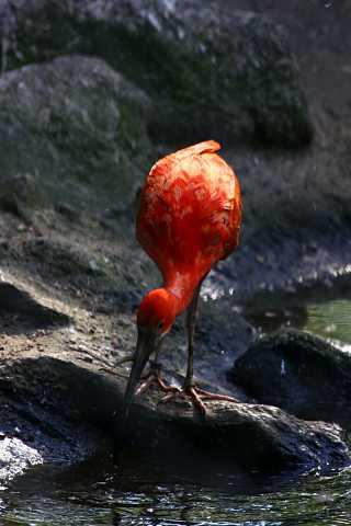 Bird in Berlin by Scott Joyce